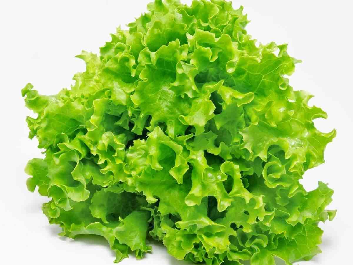 Can You Freeze Lettuce To Make It Last